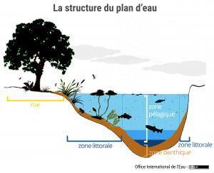 La structure du plan d'eau