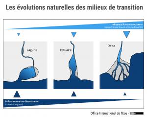 Les évolutions naturelles des milieux de transition