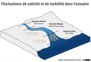 Fluctuations de salinité et de turbidité dans l'estuaire