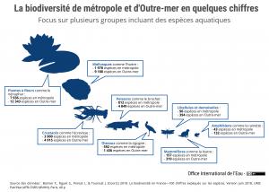 La biodiversité de métropole et d'Outre-mer en quelques chiffres