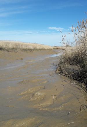 Chenal à marée basse