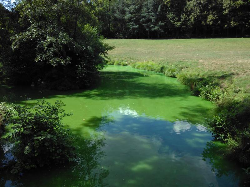 Eutrophisation d'un plan d'eau en France, été 2017