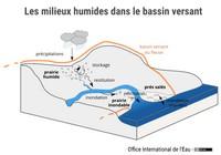 Les milieux humides dans les bassins versants