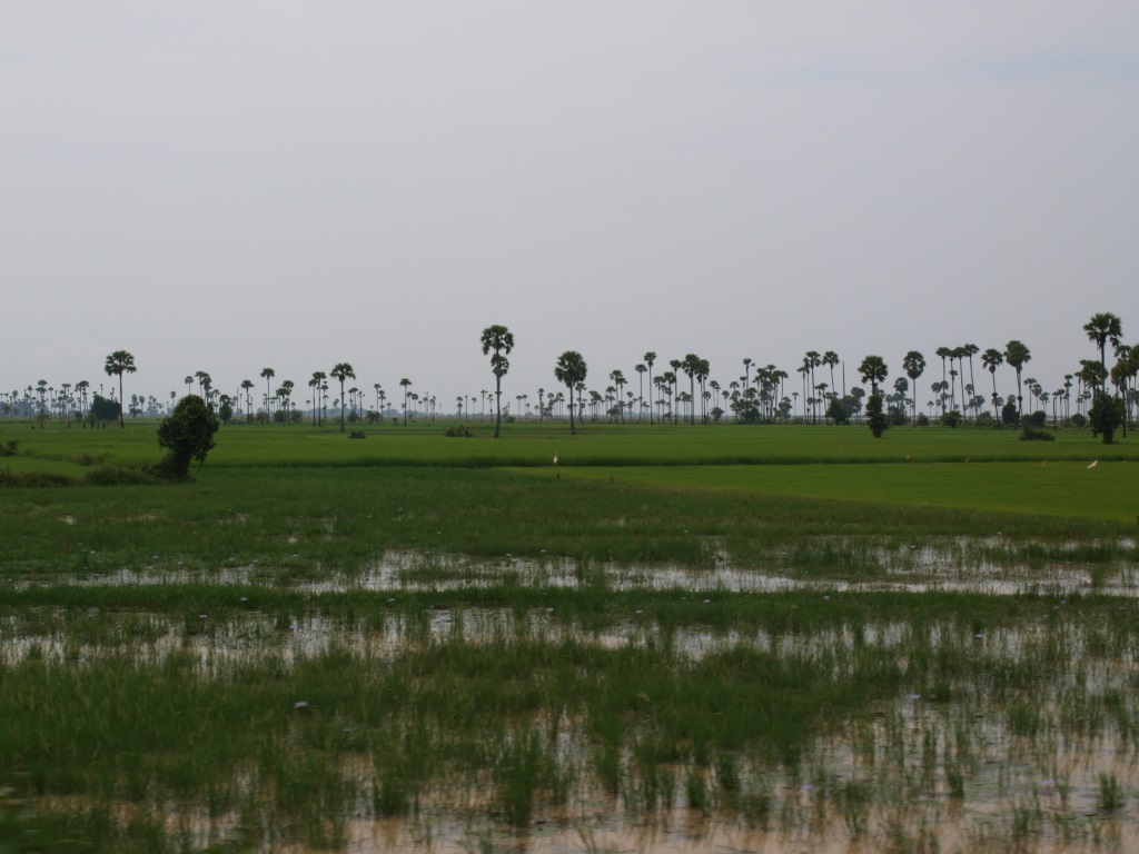 Rizières - Cambodge