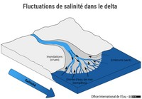 Fluctuations de salinité dans le delta