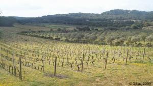 Agriculture Méditerranéenne