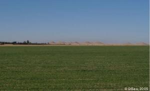 Agriculture dans le Sahara