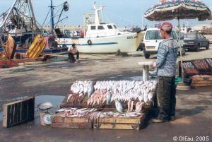 Etal de poissons au port