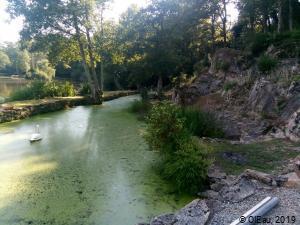 Eutrophisation des eaux douces