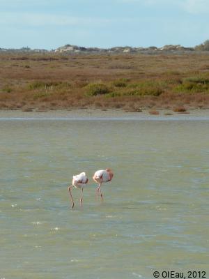 Camargue biodiversité 2