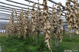 Poissons séchés