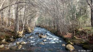 Rivière dans le parc de la Jacques-Cartier