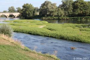 Atterrissement colonisé par la végétation sur la Loire