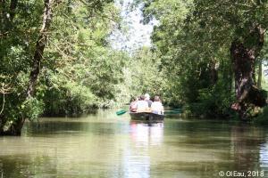 Barque dans le marais poitevin