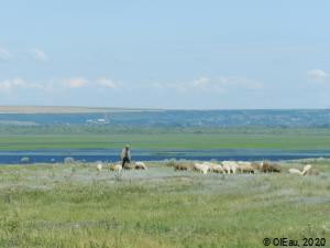 Troupeau de moutons et berger