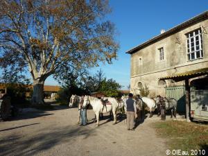 Camargue agriculture polyculture - élevage