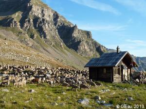 Elevage ovin en montagne