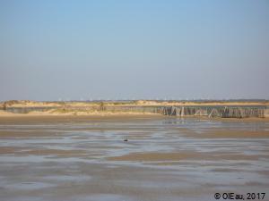 Littoral et parc éolien - Camargue